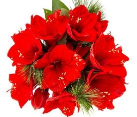 букет из красных амарилисов