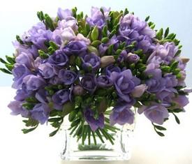 букет из 101 цветка лавандовой фрезии