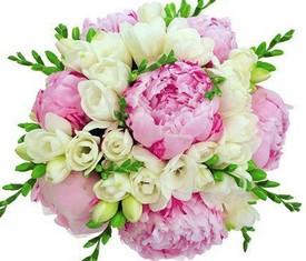цветы розовые пионы и белые фрезии