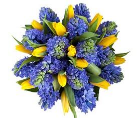 цветы гиацинты и тюльпаны