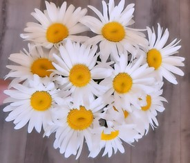 9 крупных цветов ромашки