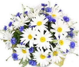 цветы васильки и ромашки