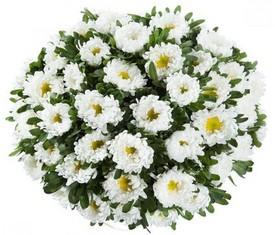 цветы 101 белая астра с доставкой