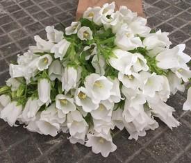 букет из 29 белых цветов колокольчиков