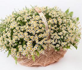 полевые цветы ромашки в корзине