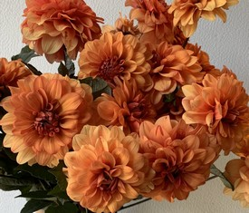 цветы рыжие георгины