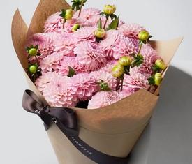розовые георгины цветы