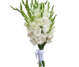 цветы белые гладиолусы