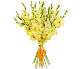 цветы желтых гладиолусов