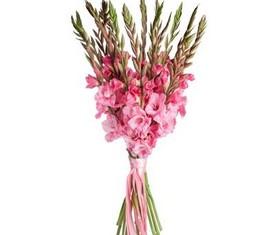гладиолусы розовые