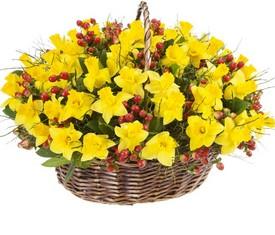 корзина из цветов 101 нарциссов и зелени