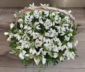 корзина из 251 цветка подснежника