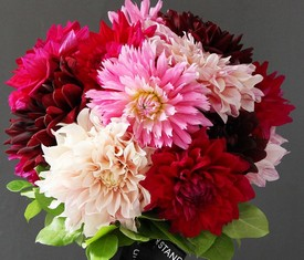 букет из розовых и красных георгинов