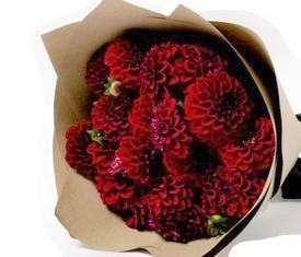 15 цветов бордовых георгинов
