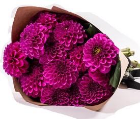 букет из 15 цветов малиновых георгинов